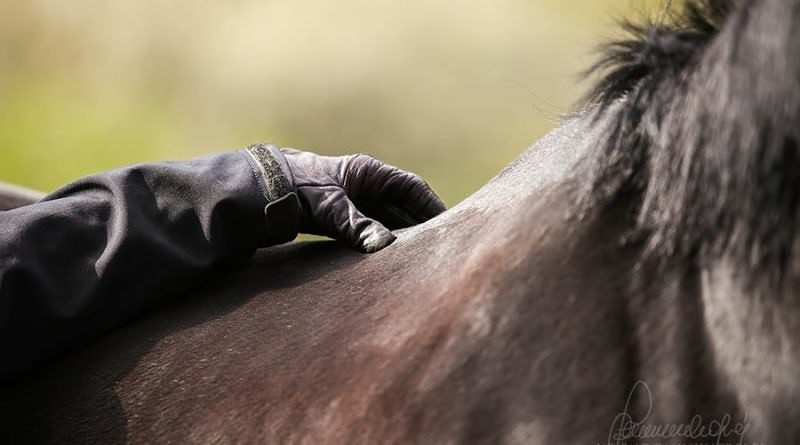Horses and the Placebo Effect