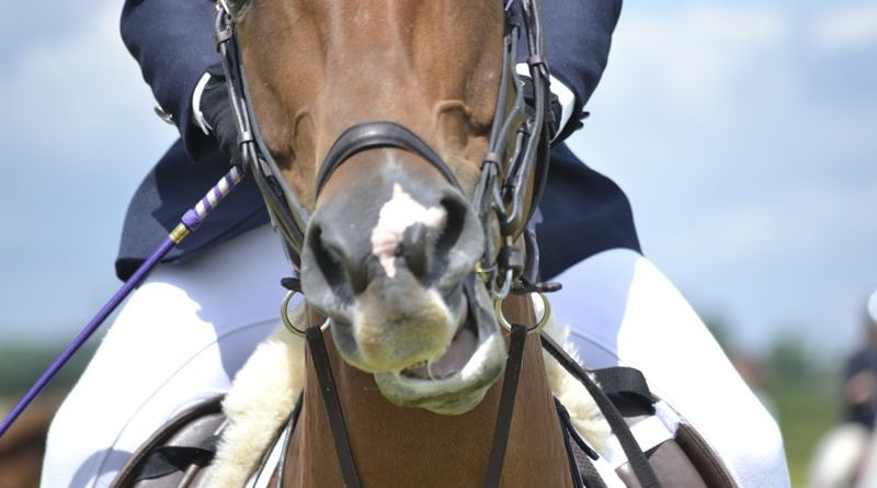 Why excitement is probably not why your horse is strong under saddle