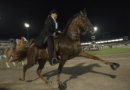 Chestnut Tennessee Walking Horse performing the Big Lick