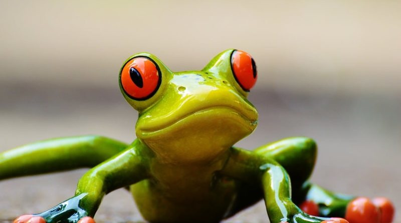 picture of a funny-looking tree frog, bright green with orange eyes and toes