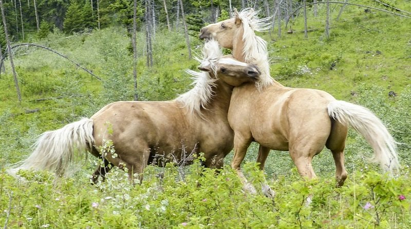 Introduction to Evolution – Part 3: How understanding evolution can help your horsemanship
