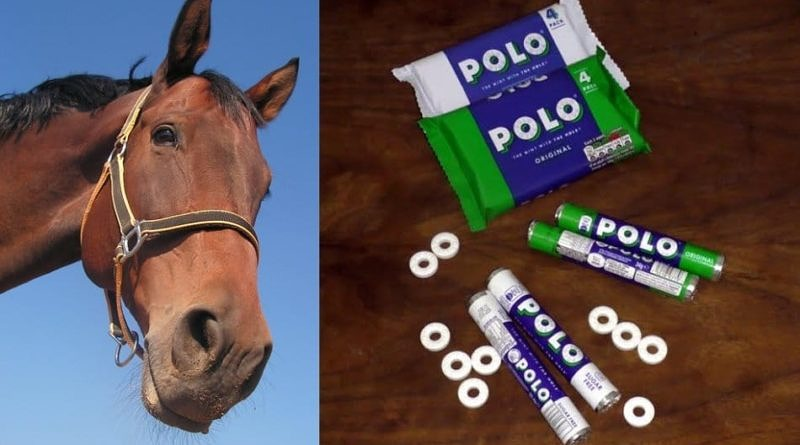 Split image with bay horse head looking down on a blue background on the left and a collection of Polo original and sugar-free Polo multipacks, tubes and individual mints on a wood background on the right