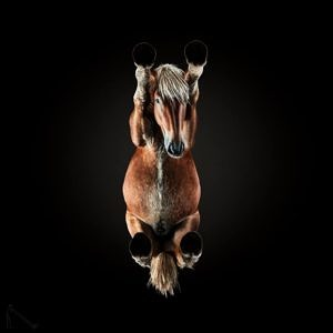 Photo of horse from the Underlook Project