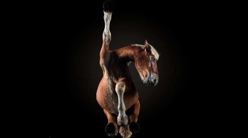 underlook under-horse photo