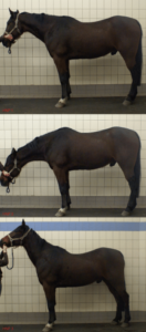 A horse's head position affect its back