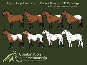 Combination Horsemanship homozygous LP pattern chart