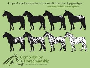 Combination Horsemanship heterozygous LP pattern chart