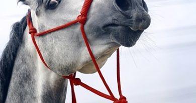 fearful horse