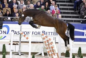 Belgian Warmblood free jumping
