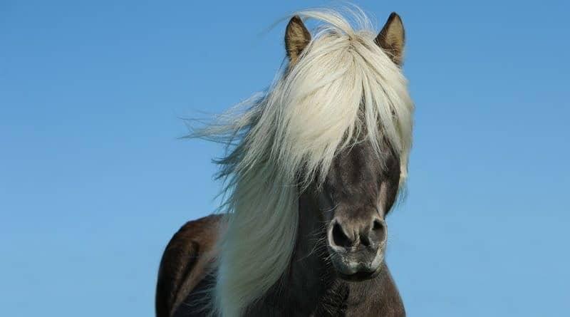 Horse fact or horse fantasy? True or False quiz!