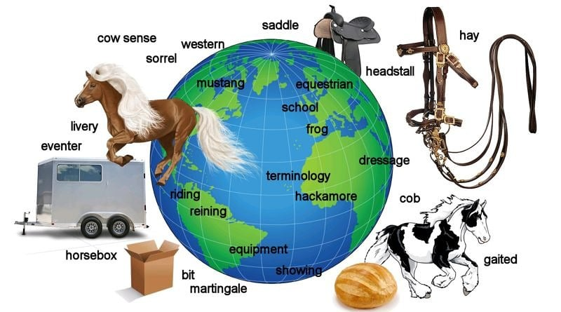 Quiz: World equestrian terminology – how international are you?