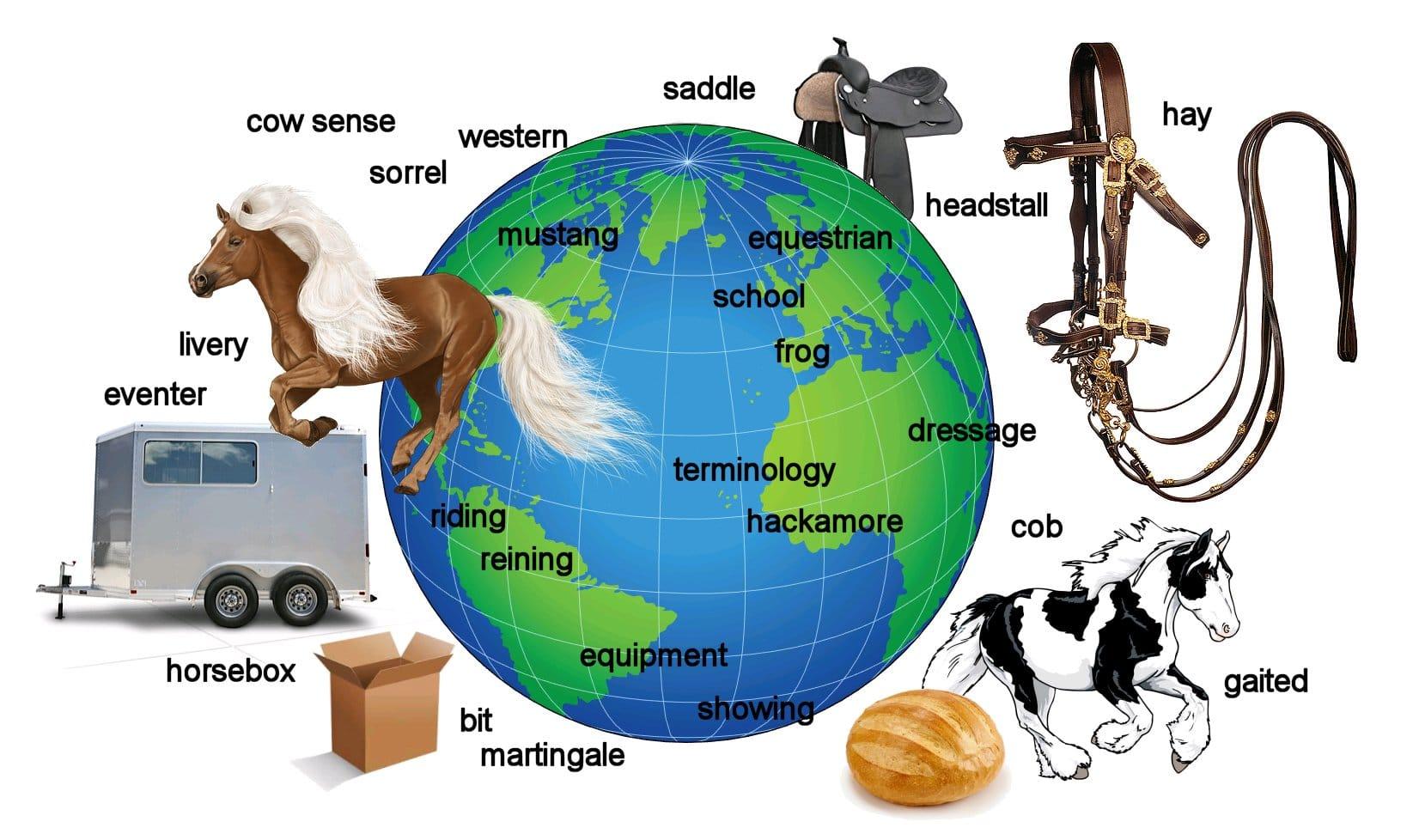 Quiz world equestrian terminology how international are you quiz world equestrian terminology how international are you good horse ccuart Images