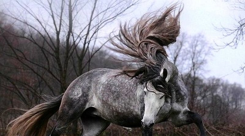 What's in a mane?