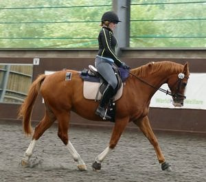 horse ridden pilot study world horse welfare