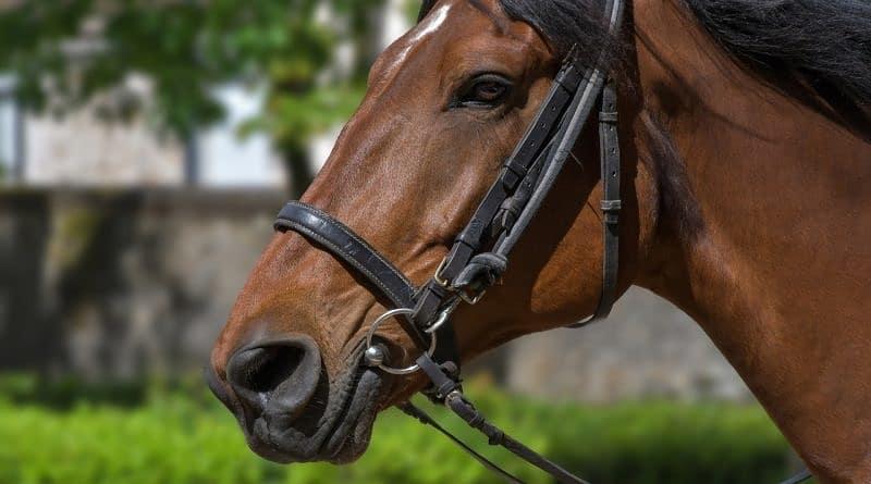 Should I change my horse's bit?