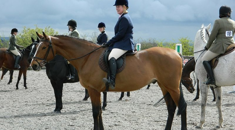 horse riders at a show