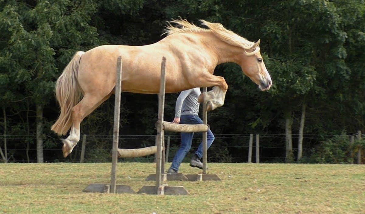 Video Jumping At Liberty Good Horse
