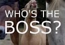 Can YOU guess the boss?