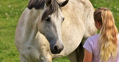 grey horse and girl looking at each other