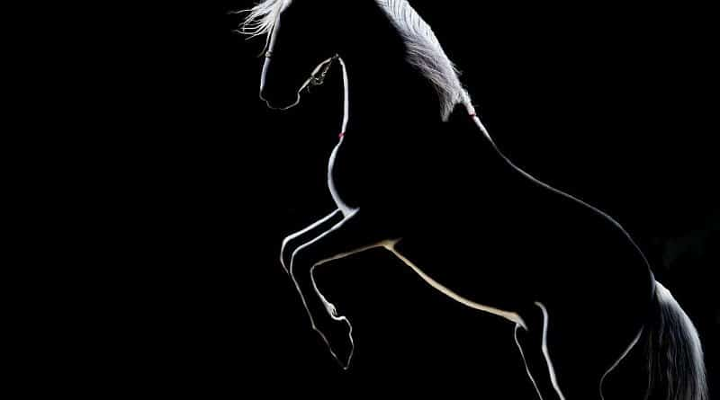 rearing horse silhouette